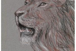 Conte crayon portrait, Maria Ciola, Drawing